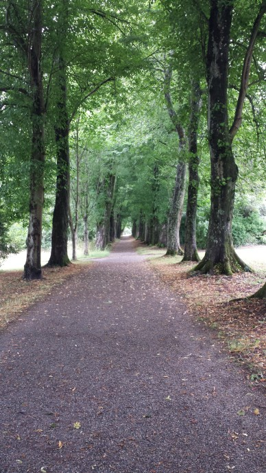 Saltram House 6- Pretty Path